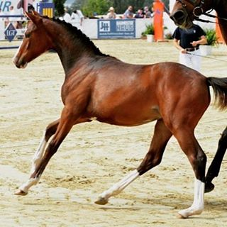 Hallo🏼Mein kleines Pferdchen als Fohlen. Mich würde es sehr freuen, wenn ihr mal bei meinem crowd funding Projekt vorbei schauen würdet! Lg eure Kim#horse #horseoninsta #horsepower #horseoninstagram #pferdeliebe #pferdepower #crowdfunding #spendetbitte #grösterwunsch  #whithcolors #ahorsewithcolors #fohlen #oldtimes #Pferd