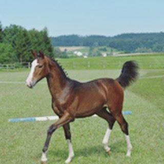 Hey da ist die Maus mal wieder als kleines Fohlen️️ Habt ihr Tiere?-Ich habe einen Kater  und bin am  Pferd wünschen#katze #haustier #pferd #horse #pferde #hufe  #baby #whisky #whiskey #withcolors #ahorsewithcolors #willsie #bayrischeswarmblut #wunsch