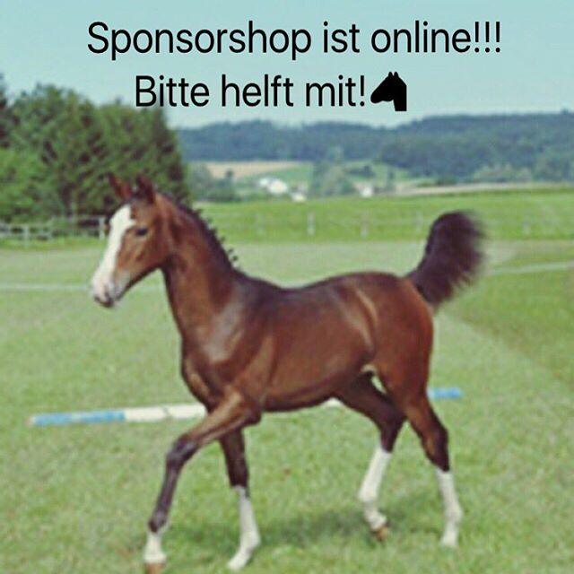 Hallo🏼Mein Sponsorshop ist jetzt online! Würde mich mega freuen ,wenn ihr im Shop einkauft!️Link ist im Profil! #horse #wunsch #horsepower #horselove #spende #crowdfunding #pferd #pferdeliebe #whisky #love #traumpferd #withcolors #kleinpferd #fohlen #fohlenpower #spende #love #helft #mir #bitte #sponsorshop #shop #mein #wunsch #ahorsewithcolors #pferde #shop #whiskey