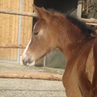 Hallo 🏻🏼 würde mich mega freuen , wenn ihr etwas spenden würdet, bei meiner Aktion. Dann würde meinen Traum ein Stückchen näher kommen. #pferd #horsedream #ahorsewithcolors #withcolors #horsewithcolors #pferde #horses #dreamhorse #pferdetraum #traumpferd #internet #shop #sponsorshop #crowdfunding #project  #crowdfundingproject #whiskey #whisky #love #helft #mir #bitte #instagram #fohlen #horse #fohlen