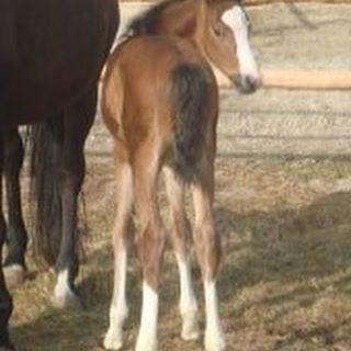 Gib nicht auf mein kleines Baby!#horse # # #️️ # # # #pferd #anhänger #traumpferd #dreamhorse #mein #projekt #crowdfunding #spende #für #ein #Pferd #ahorsewithcolors #withcolors #whisky #whiskey #herz #kauft #ein
