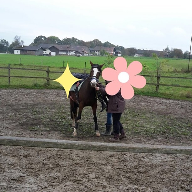 Withcolors ist da gerade beim einreiten! Die macht das sooo toll#horse #withcolors #whisky #whiskey #pferd #ahorsewithcolors #my #love # # #bitte #helft #mir #crowdfunding #braun #bayrischeswarmblut #159cm
