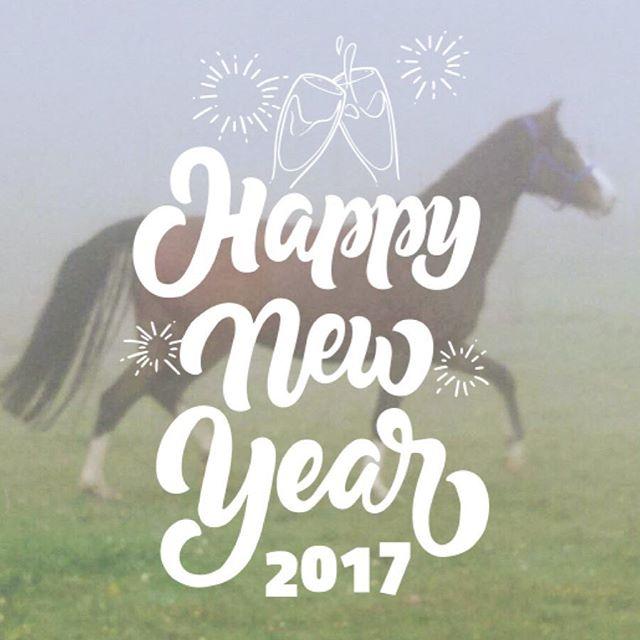 Happy new year 2017!#horse # # #️️ # # # #pferd #anhänger #traumpferd #dreamhorse #mein #projekt #crowdfunding #spende #für #ein #Pferd #ahorsewithcolors #withcolors #whisky #whiskey #herz #kauft #ein #happynewyear #newyear #neuesjahr #glück #gesundheit #,...