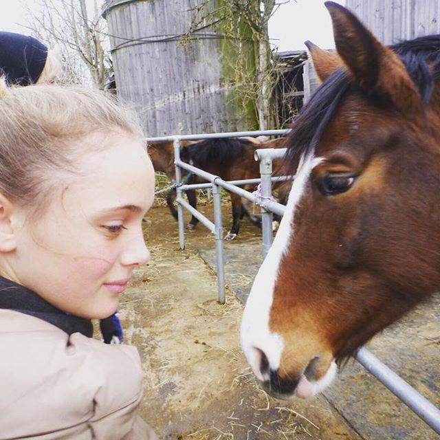 Meine kleine#horse #pferd #whisky #withcolors #whiskey #my #dream #love #braun #bayrisches #warmblut #6jahre #stute