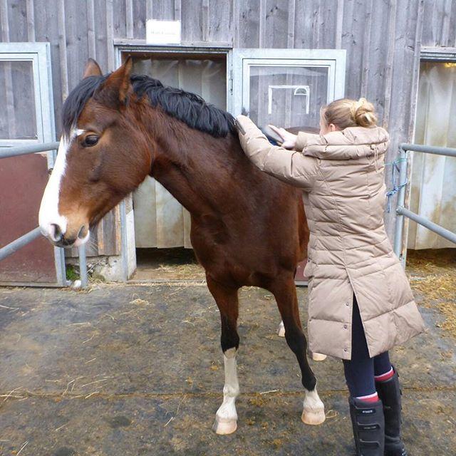 Da habe ich sie besucht!🏻 #horse #pferd #whisky #whiskey #withcolors #my #love #bitte #spenden