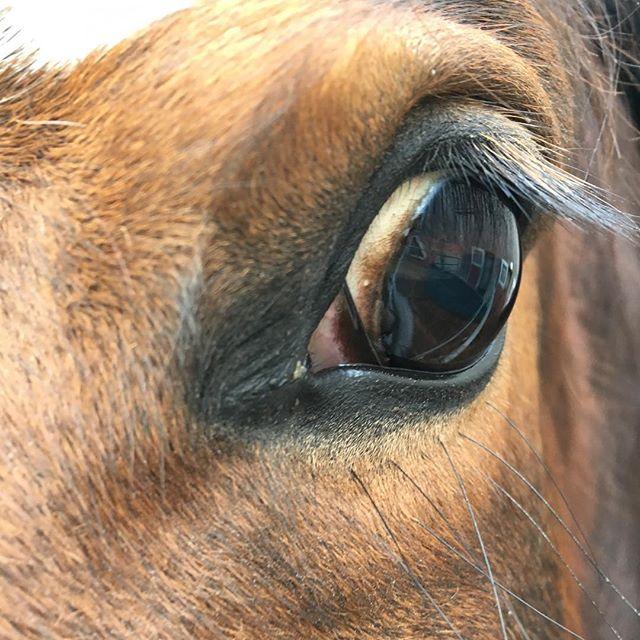 Man sagt:,, Wenn einem das Auge eines Pferdes gefällt, mag man dieses auch!'' #horse #whiskey #whisky #withcolors #helft #mir #bitte #love #this #horse #auge #pferd #braune #bayrische #warmblut #stute #6jahre