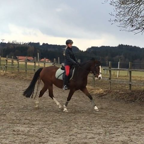 Bald wird es ernst! Sie wird verkauft noch ist aber noch kein Käufer in Sicht!Bekomme ich sie oder wird sie verkauft!!! Bitte spendet, dann kann ich sie kaufen!!!#horse #pferd #spende #whisky #whiskey #withcolors #love #this #pony #braune #bayrischeswarmblut #stute #6jahre #bitte #helft #mir #so #schöne #gänge #ich #reite #sie #spendet #bitte #hilfe #help #