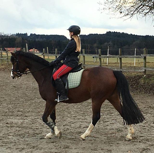 Bitte helft mir und spendet auf meiner Website! Withcolors muss zu mir!#horse #pferd #whiskey #whisky #help # #my #big #love #spendet #bitte #withcolors #muss #zu #mir