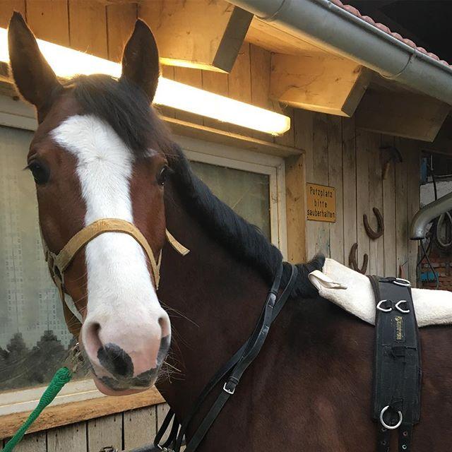 Hab heute die kleine Whisky mal wieder besucht #whiskey #whisky #help #horse #pferd #love #reiten #stute #blesse#longe #withcolours