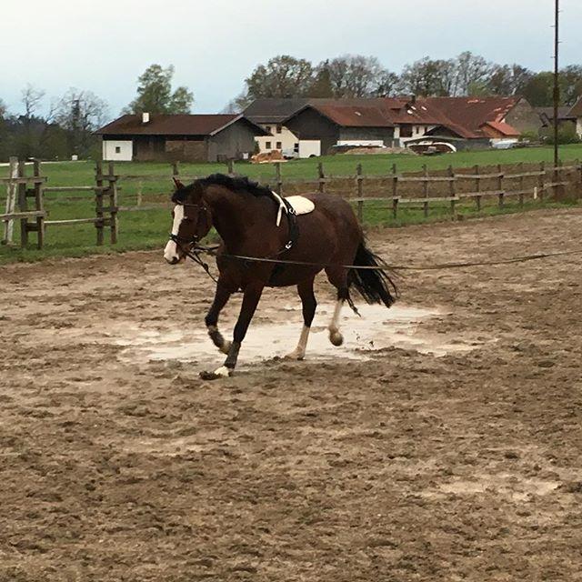 ️️️ #horse #love #pferd